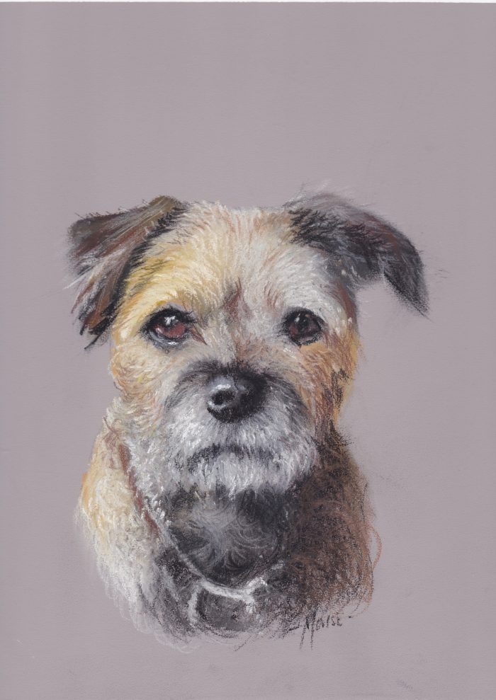 """Border Terrier"" by David 'Mouse' Cooper."